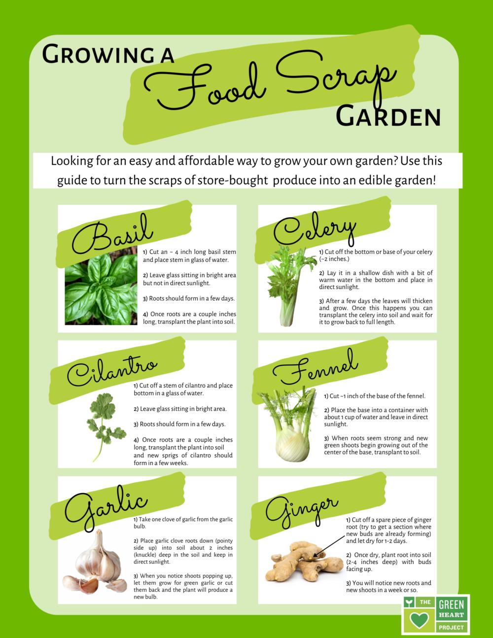 Growing a Food Scrap Garden