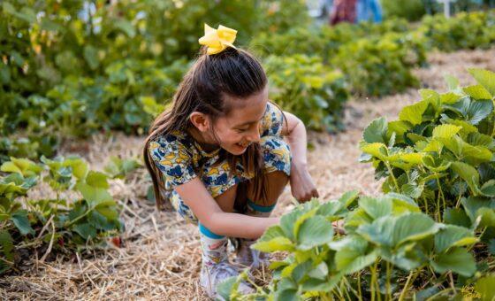 00933-20190516-harvestdinner-com
